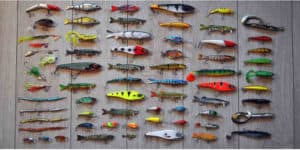 Best Bait For Trout Fishing